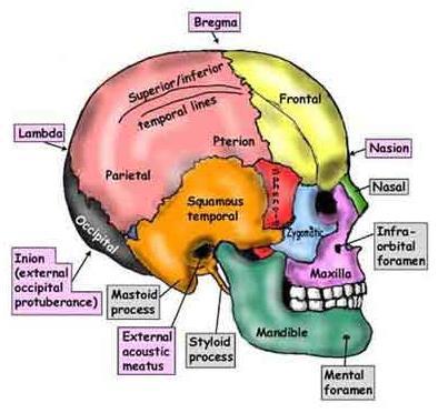 craniosacrale-terapia-milano-simona-vignali