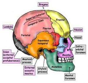 craniosacraleterapiamilanosimonavignali