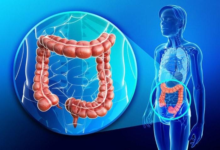 5 curiosità che ancora non sai sull'intestino