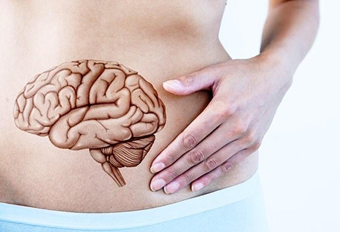 Abbiamo un secondo cervello nell'intestino?