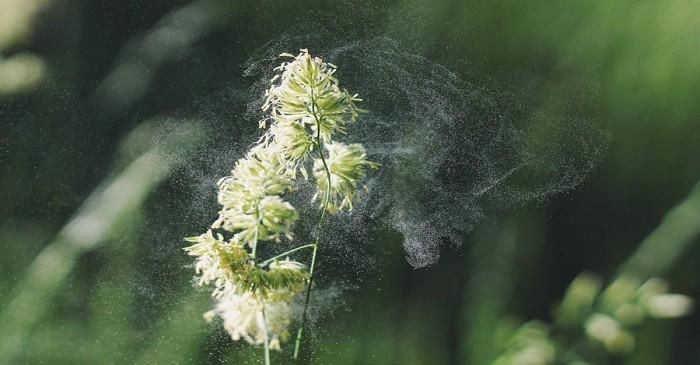 Allergie stagionali: questi sono i migliori rimedi naturali