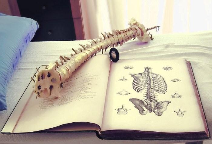 Articoli Osteopatia