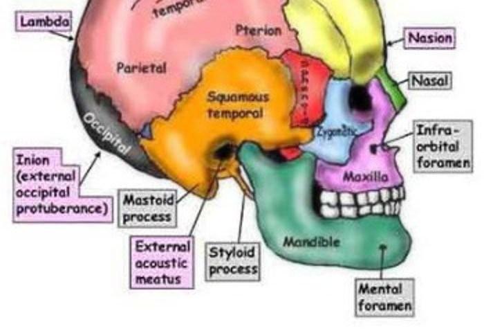 Benefici dei trattamenti Craniosacrale