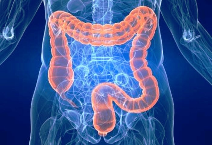 Se l'intestino dà i numeri... Anatomia di colon e intestino