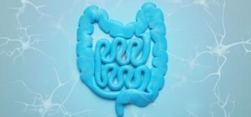 Queste 5 notizie semi-sconosciute sul sistema nervoso enterico spiegano perché l'intestino è il secondo cervello