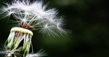 L'Allergy Day 2019 sarà il 5 maggio, festa con la Serie A