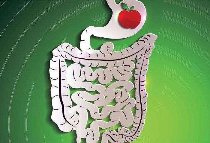 Idrocolonterapia: articoli su idrocolon e pulizia del colon